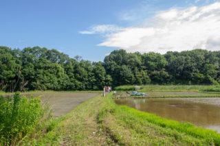 EAsT135 田植え前の風景