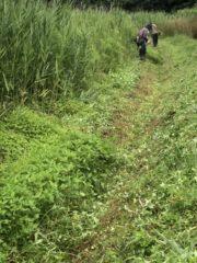 梅雨間の除草作業