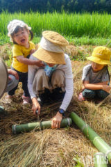 親子で竹をきります