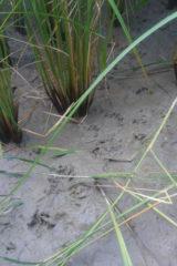 何かの足跡