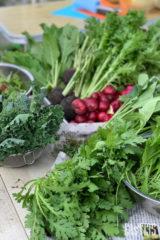 色鮮やかな野菜たち