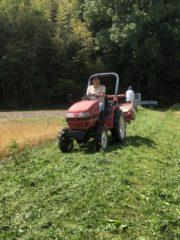 2020雑草を刈る