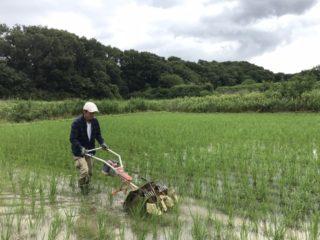 EAsT135草刈りの日々