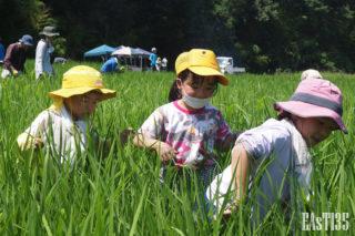 草に分け入る女傑たち