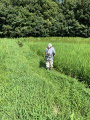 神戸市西区の有機米育成プロジェクト EAsT135