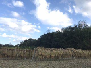 収穫残り2020