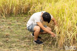 半袖半ズボンで蚊を一手に引き受ける