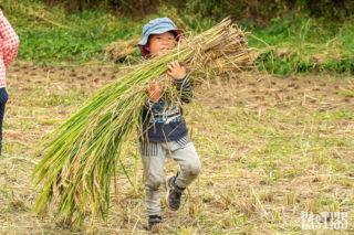 2020神戸農家コレクション