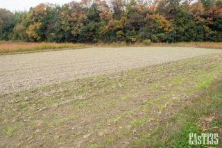 隣には麦を植えています